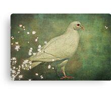 The Magical White Dove Canvas Print