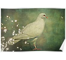 The Magical White Dove Poster