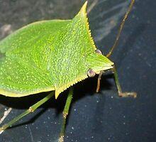 Leaf-like bug by ♥⊱ B. Randi Bailey