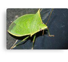 Leaf-like bug Canvas Print