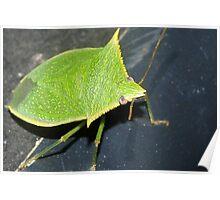 Leaf-like bug Poster