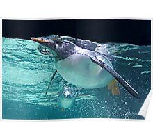 Penguin, Melbourne Auquarium Poster