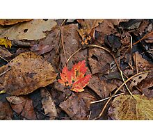 Red leaf Photographic Print