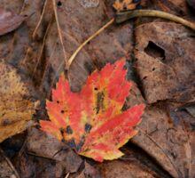 Red leaf Sticker