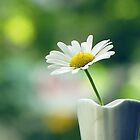 Marguerite by vichy
