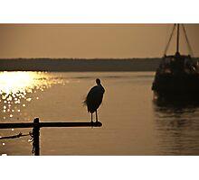 Lone Crane Photographic Print