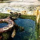 Wishing Well.  by allabouther