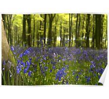 Bluebell Blanket Poster