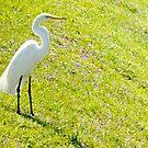 Egret on an embankment by ♥⊱ B. Randi Bailey