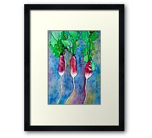 French Breakfast Radishes Framed Print
