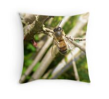 HOVERFLY......2012 Throw Pillow