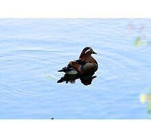 Mr Mandarin Duck Photographic Print