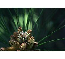 Free-Lensing Pine Tree Photographic Print