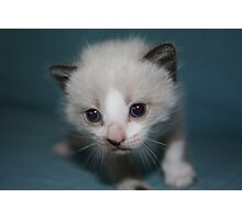 Cute kitty Photographic Print