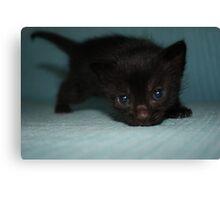 Cute black kitty Canvas Print