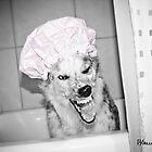 Stella's bath time by Texas Sheepdogs