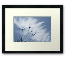 Dusty Blue Dandelion Clock and Water Droplets Framed Print