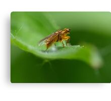 yellow insect Canvas Print
