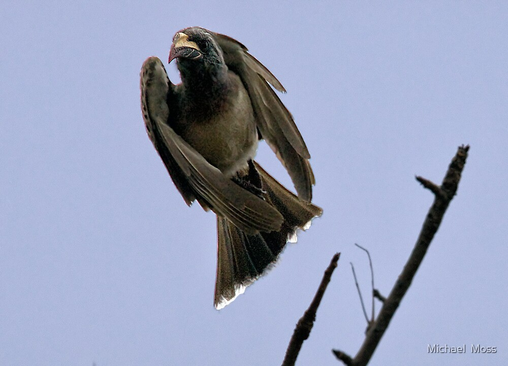 Ugly Birds Can Fly And Look Good ! by Michael  Moss
