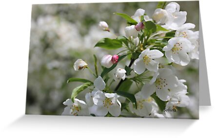 Blossom Time by Rosemary Sobiera