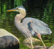 Blue Heron Reflections Isaiah 46:4 Sticker