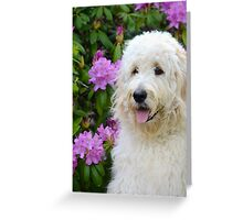 Fluffy Goldendoodle Greeting Card