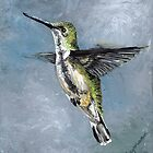Humming Bird by Judy Bergmann