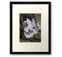 The Lichen of the Baskervilles Framed Print