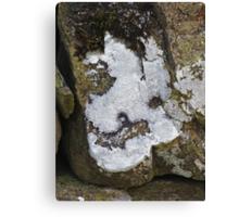 The Lichen of the Baskervilles Canvas Print