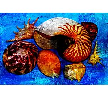 Pacific Ocean Shells On Blue  Photographic Print
