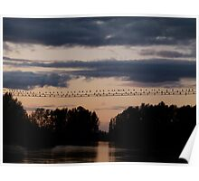 Cormorants in Mt. Vernon at Sunset Poster