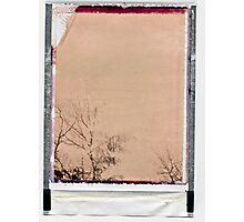 inky trees. Photographic Print