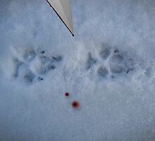 footprints in the snow by NafetsNuarb