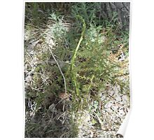 Wild asparagus Poster