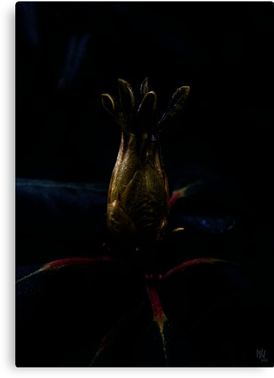 Rhododendron bud - pitch dark version by NafetsNuarb