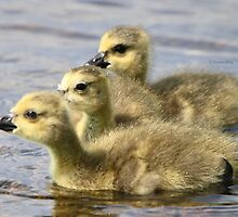 Three Babies by Heather King