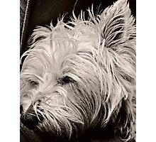 Sleepy Evie Photographic Print