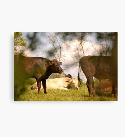 East Devon Rural ...43 Canvas Print