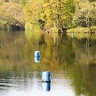 Buoys will be buoys by cj1970
