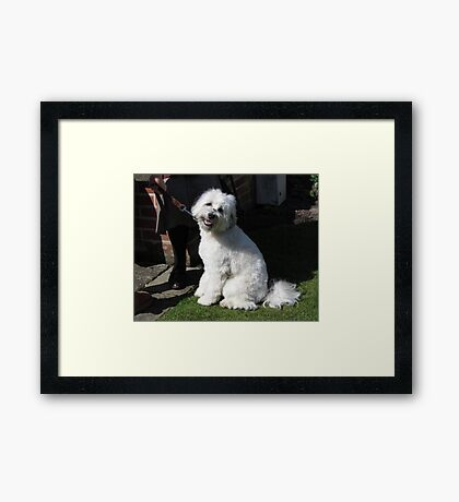 AM I CUTE OR WHAT? Framed Print