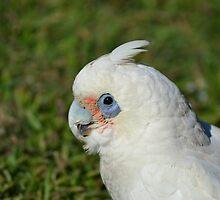 Hello Birdie by TheaShutterbug