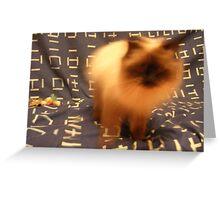 Kinetic Himalayan/Siames Cat Greeting Card