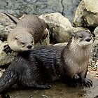 Otters by Amanda Vontobel Photography