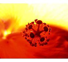 Hibiscus Fire! Photographic Print