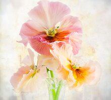 Violaceae  by Omasjon