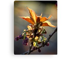 Leaf Protector at Sunset Canvas Print