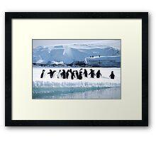 Adelie Penguin Group - Antarctica Framed Print