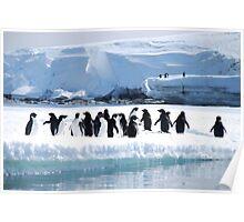 Adelie Penguin Group - Antarctica Poster