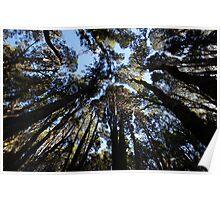 Beautiful Tasmania - Treetops Poster