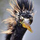 Birds by Savannah Gibbs
